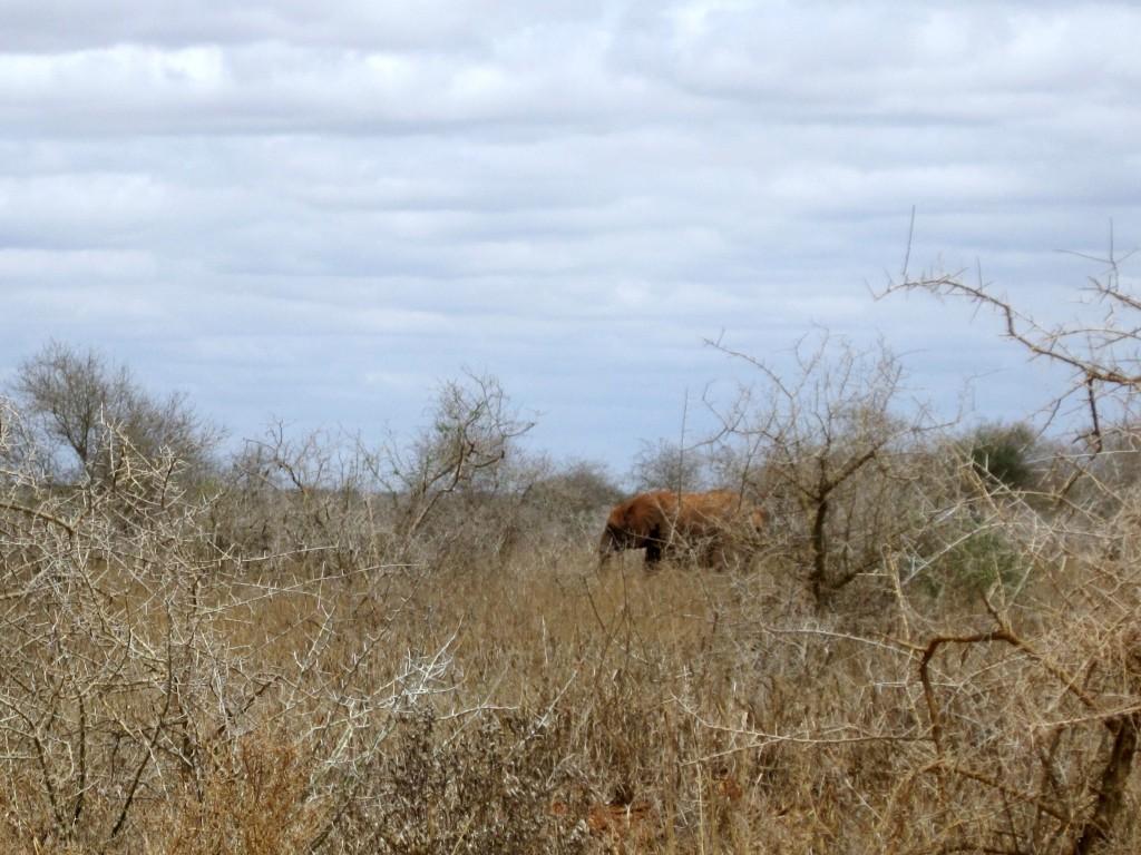 Olifant in de bosjes